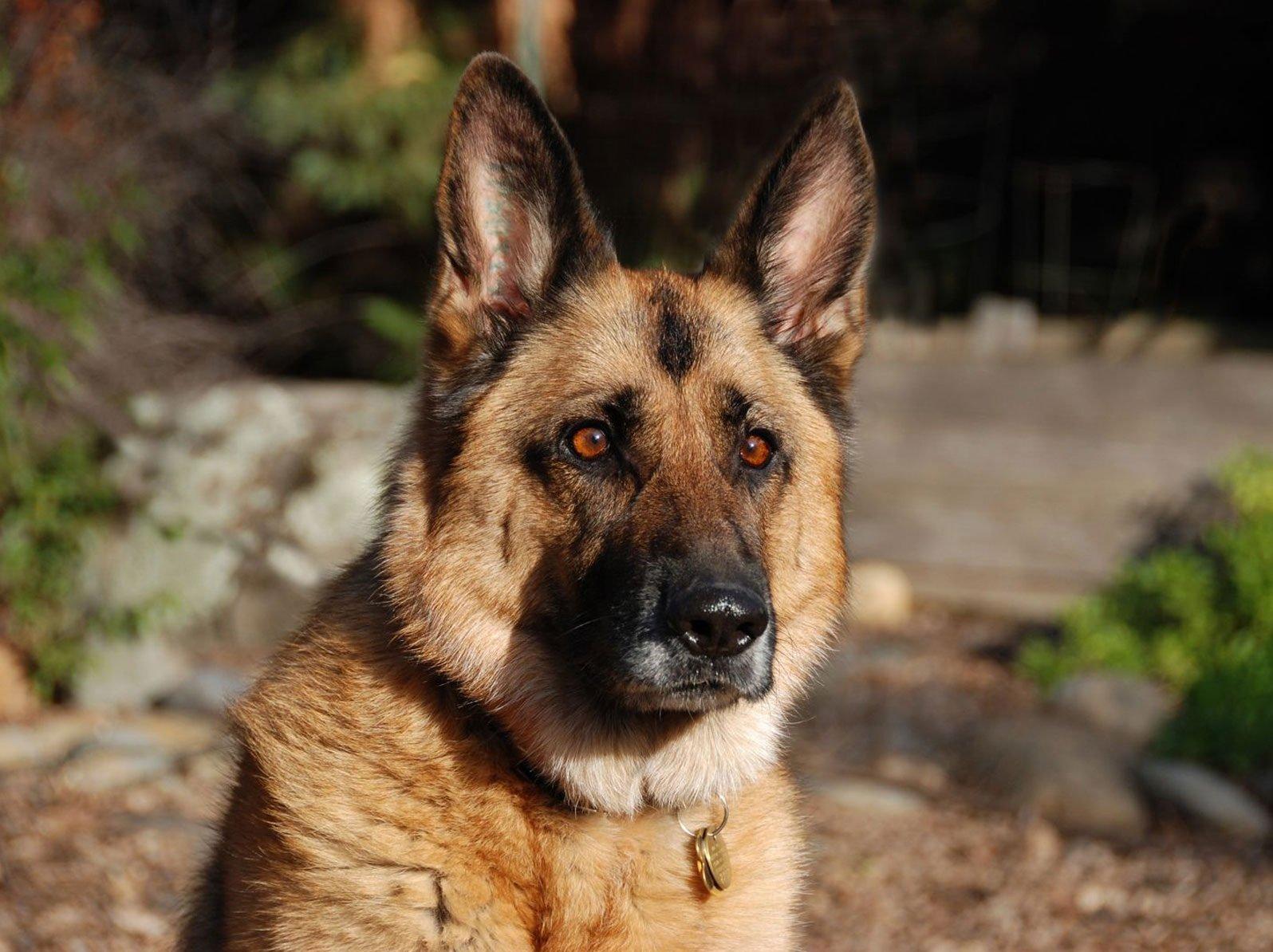 ¿Da un perro seguridad a tu hogar?