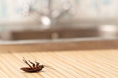 Cómo mantener alejados a los insectos de tu casa en verano